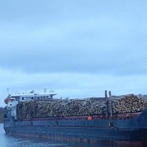 Segezha Group opens sawtimber carrier navigation along the Volga-Baltic waterway