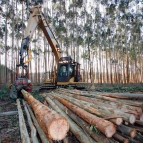 Sweden: Continued decline in area of forest notified for final felling