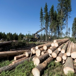Roundwood prices in Finland increased in June 2021