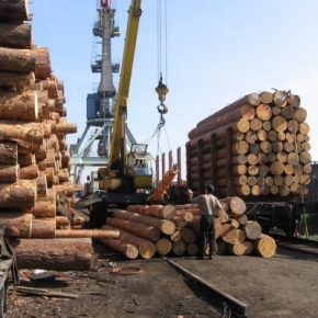 As of January 1, 2022, quotas on exporting softwood pulpwood and logs will be cancelled in Russia