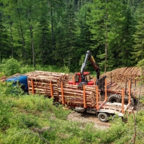 Sveza to begin its own timber harvesting in Perm Region
