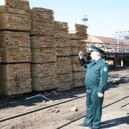 Томская обл. увеличила в 2,5 раза поставки карандашных дощечек в Чехию