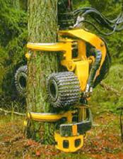Карелия первой в России перейдет на интенсивное лесопользование