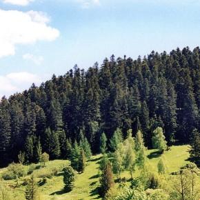 Минэкономразвития Украины предлагает направить 1 млрд гривен на устойчивость лесных экосистем