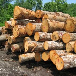 «Вологдалесхоз» открыла лесопильный завод мощностью 40 тыс. куб м