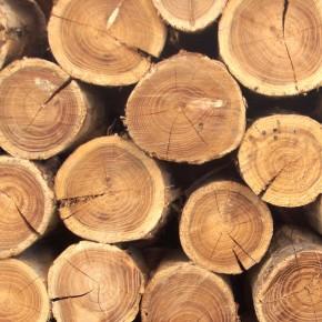 «Лесные вести»: как формируется цена древесного сырья в России и Финляндии