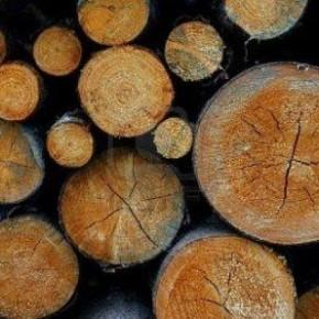 WhatWood: Цены на круглый лес в России в апреле были стабильны