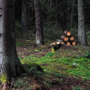 Шведская Rorvik Timber открыла офис по закупкам круглого леса в России