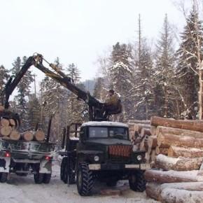 Госдума приняла закон об учете древесины