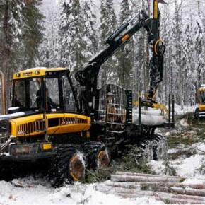 Ставки арендной платы за лесные ресурсы могут вырасти с 2015 г.