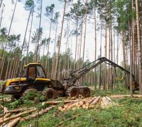 В 2017 г. объём заготовки древесины в России сократился впервые за 5 лет
