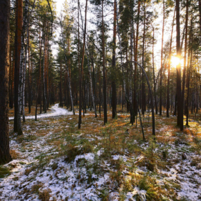 В департаменте лесного хозяйства по Сибирскому федеральному округу провели круглый стол с лесопользователями