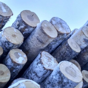 Экспорт фанкряжа – главное препятствие в отсутствии необходимого объема сырья для производителей фанеры?