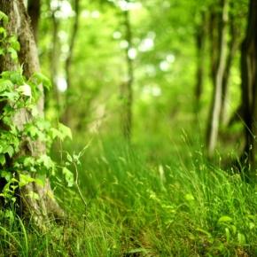 В Омской области подведены итоги акции «Чистый лес»