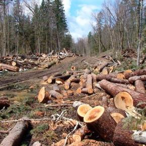 Система «ЭРА-ГЛОНАСС» будет способствовать ужесточению контроля за незаконным оборотом древесины