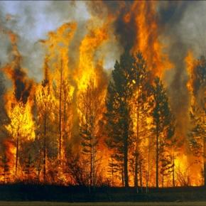Рослесхоз назвал количество лесных пожаров в 2018 году