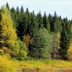 Новый лесной план Архангельской области согласован Рослесхозом