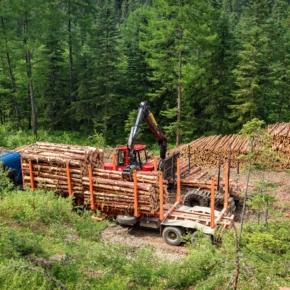 В Хабаровском крае построят новый деревообрабатывающий комплекс стоимостью 110,6 млн рублей