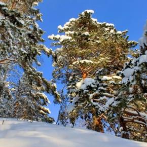 В Лесной кодекс могут внести изменения для Дальнего Востока