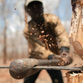 Рослесхоз: количество незаконных рубок в Свердловской области снизилось на 37 %