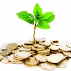 Поступление платежей от использования лесов в Карелии увеличилось на 64 %