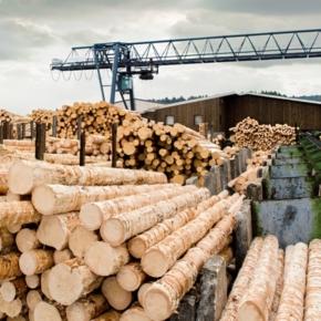 Три новых деревообрабатывающих производства появятся в Свердловской области