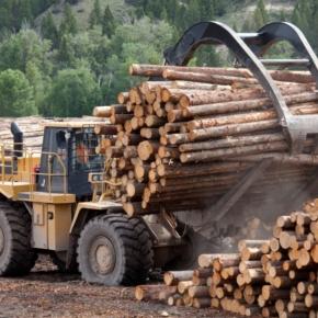 Инвесторы вложат более 6,5 млрд рублей в развитие ЛПК Республики Коми