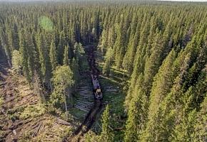 """Segezha Group и """"Кронштадт-Аэро"""" создают автоматизированную систему по контролю за лесозаготовкой"""