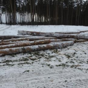 На территории Пензенской области за не вывезенную древесину привлечены лесопользователи