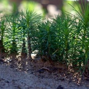 В 2019 году арендуемая предприятиями Segezha Group площадь лесов вырастет до 9.1 млн га