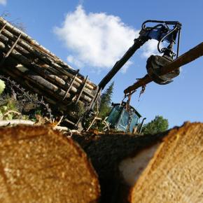 К 2025 году валовый объем производства лесной промышленности Китая увеличится на 50 %