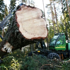К 2030 году Удмуртия станет центром глубокой переработки древесины, к этому времени объем реализации необработанных лесоматериалов планируется снизить более чем на 90%