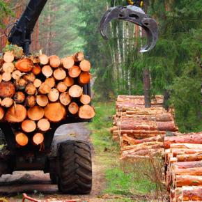 Объемы заготовки древесины в Костромской области достигли 30-летнего максимума