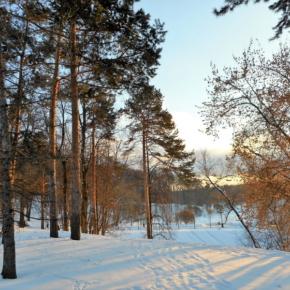 """На """"лесной план"""" Волгоградской области потратят около 3 млрд рублей"""