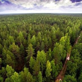 В Рослесхозе создали Совет по инвестиционной деятельности в области освоения лесов