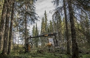 Segezha Group сертифицирует поставки и лесозаготовки по системам FSC и PEFC