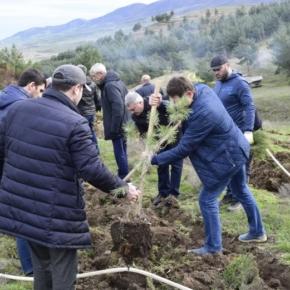 В Дагестане потратят 3 млн руб. на лесовосстановление