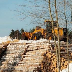 """В 2019 г. на комбинате """"Свеза Мантурово"""" с помощью снегования законсервировали рекордный объем древесины"""