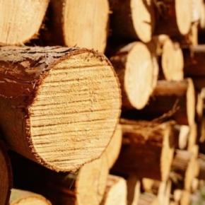 Китай снижает НДС на пиломатериалы и круглые лесоматериалы с 1 апреля 2019 г.