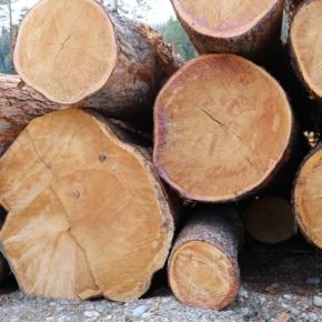 В  Хабаровском крае появится новое предприятие по переработке низкосортной древесины