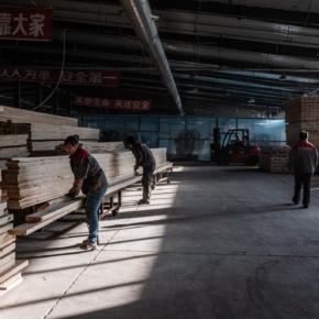 Китай словно спрут запускает свои щупальца в мировой лес: больше всех страдает Россия