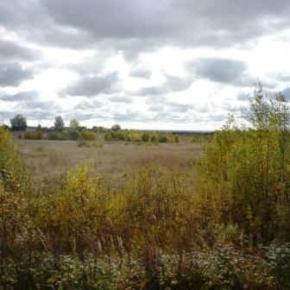 В Костромской обл. создадут новый деревоперерабатывающий цех