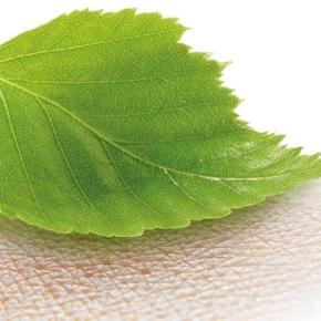 UPM выпустила новый продукт на основе древесной наноцеллюлозы для медицинской промышленности