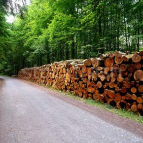 За 7 мес. 2019 г.  объем заготовки древесины леспромхозами ГК «Титан» превысил 2 млн м³