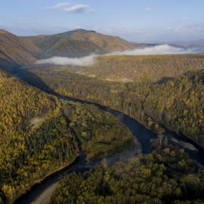 В ДФО проводят инвентаризацию лесов под инвестпроекты