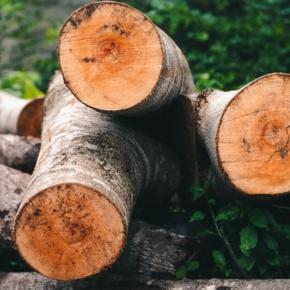 Правительство Новой Зеландии выделит NZD 19,5 млн на создание Центра передового опыта по производству древесины (Wood Cluster Centre of Excellence) в Гисборне
