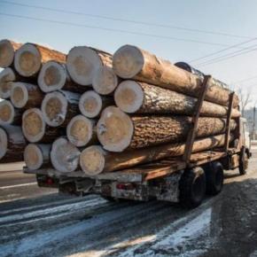 Правительство увеличило вывозные пошлины на необработанную древесину дальневосточных хвойных пород