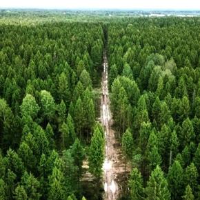 Рослесхоз: в 2019 г. площадь лесовосстановления составила 1 млн га