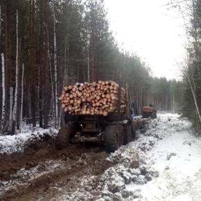 Аномальная температура ударила по лесопромышленникам Ленобласти
