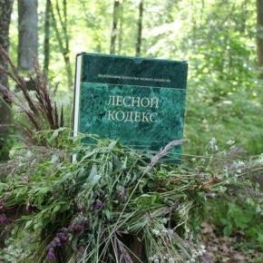 Лесопромышленные компании Архангельской обл. поддержали пакет изменений в Лесной кодекс
